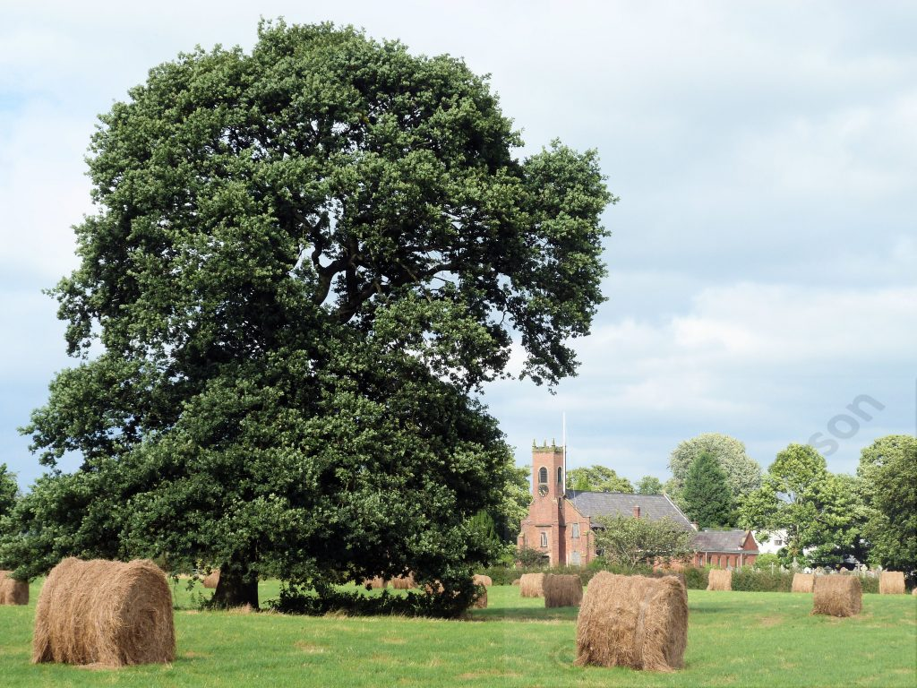 Christ Church Woodford during haymaking - phptp courtesy of Evelyn Frearson